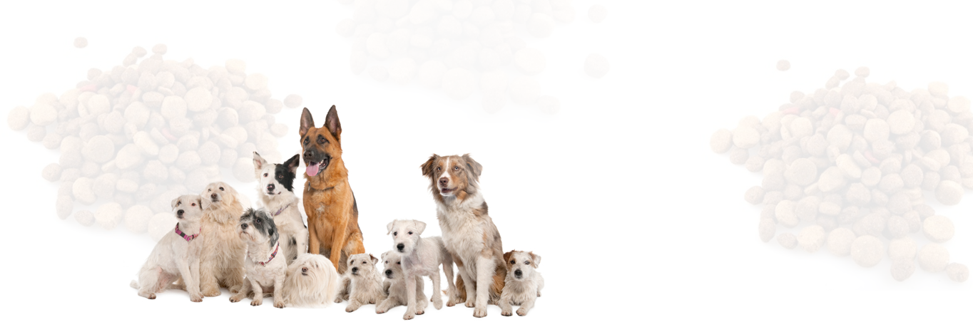 Buy Puppy Pets Shop Dog Suppliers Dogs For Purchase Delhi Ncr